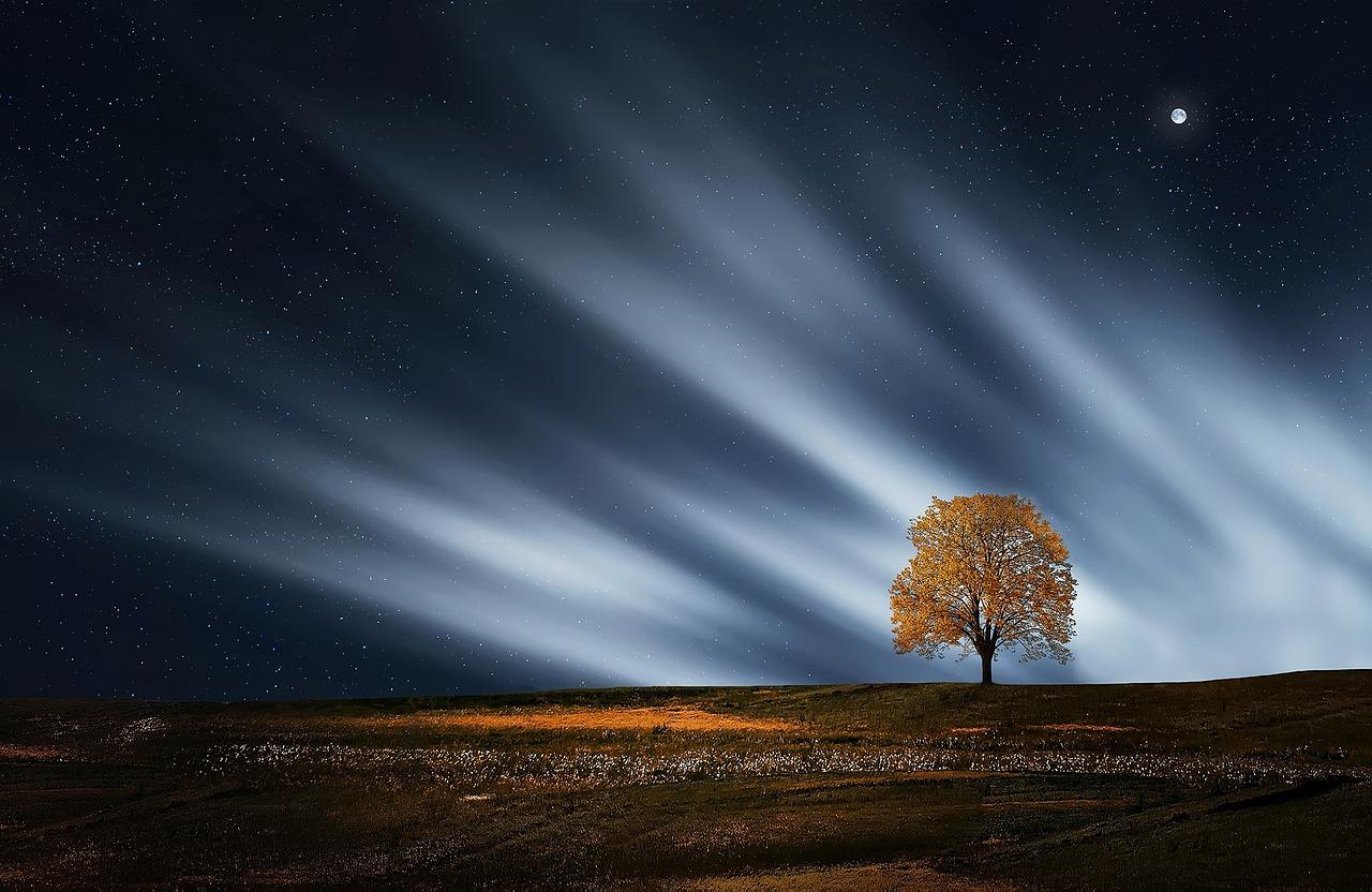 inspiracao-tree
